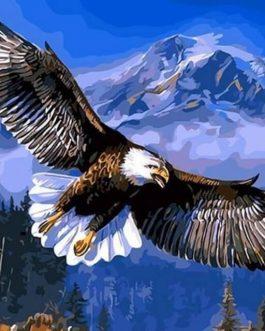 Flying Eagle számfestő készlet